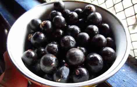 acai berry for acne skin care