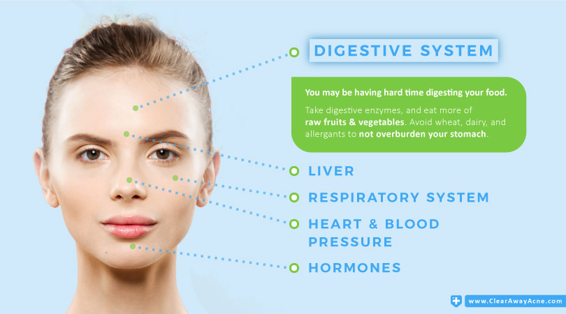 Face Mapping - The Forehead and Digestive System Link